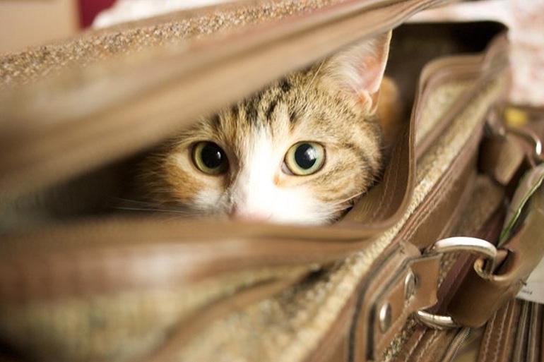 Как транспортировать котенка