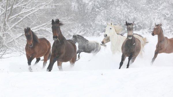 Зимовка с лошадьми