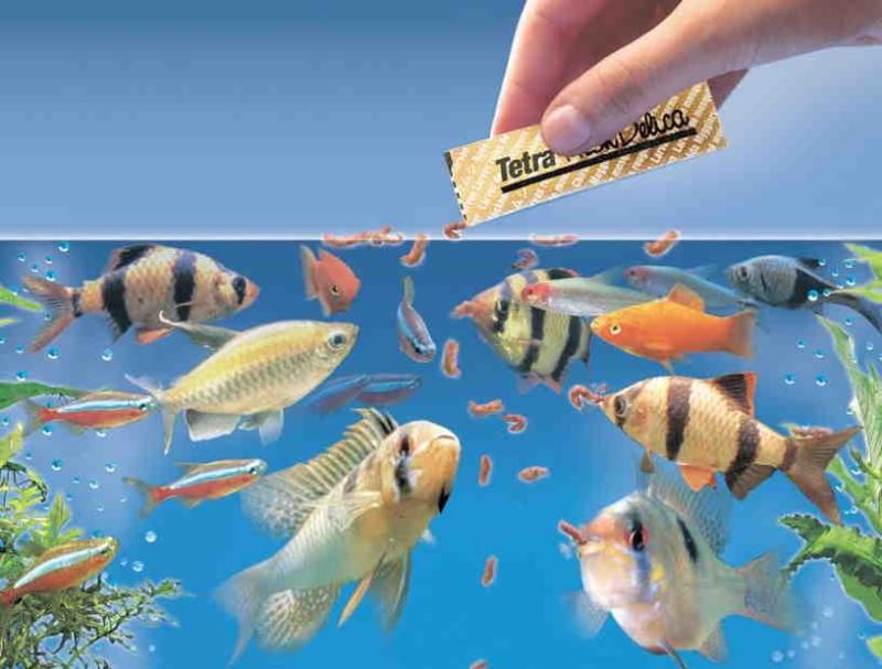 Каким кормом кормить рыбок