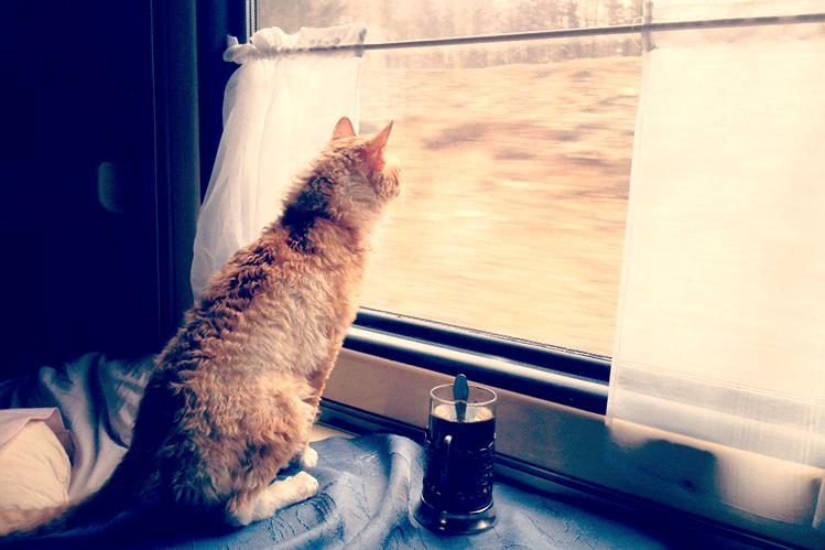 Путешествие на поезде с домашними животными