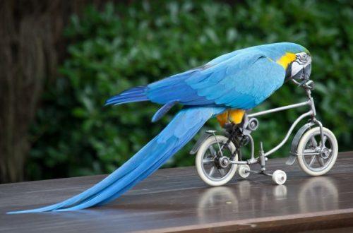 Как ухаживать за попугаем
